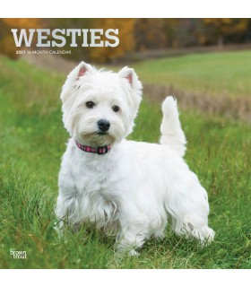 West Highland White terrier calendrier 2021