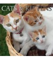 Chattes et chatons 2022