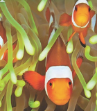 Calendriers Poissons